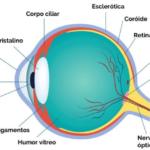 Física - Ótica da Visão